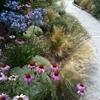 giardino naturalistico sul lago di como (3)