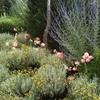giardino naturalistico sul lago di como (5)