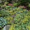 giardino naturalistico sul lago di como (7)