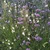 giardino naturalistico sul lago di como (8)